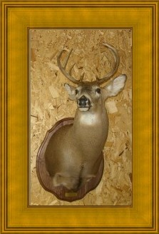 Taxidermy by Dale Streeter